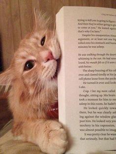 ฅ=^..^=ฅ HERE KITTY KITTY ~ Cats who have no intention of letting you read your book Twitter