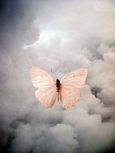 ...Keep flying .. no matter the weather... keep the dream alive... keep moving silently quietly growing ... feed your mind possibilities... keep your eyes on Jesus...Frio