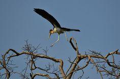 Week in Wildlife: A Greater Adjutant Stork in Guwahati city