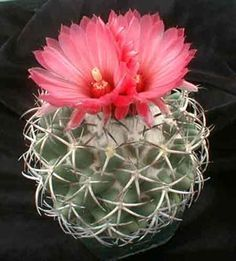 Cactus on Pinterest | 305 Pins