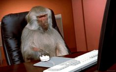 How a baboon working in an office won the week
