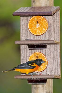 Different kinds of bird feeders for all kinds of birds | Birds & Blooms Magazine