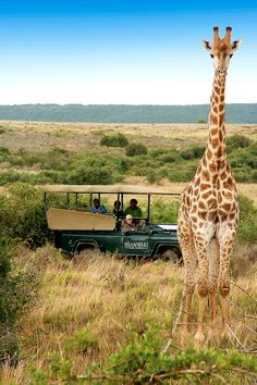 Shamwari Game Reserve - Paterson, South Africa | Take me there, Sanctuary Retreats! #virtualsuitcase