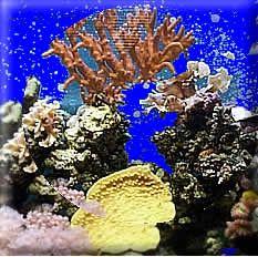 Living Reef. WarehouseAquarium ...