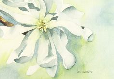 Items similar to White Star Magnolia Art - Original Watercolor Painting on Etsy