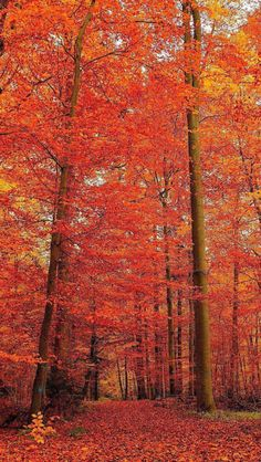 Autumn Scenery, Autumn Nature, Autumn Fall, Beautiful Photos Of Nature, Nature Photos, Beautiful Places, Autumn Photography, Photography Photos, Sunset Iphone Wallpaper