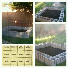 DIY Vegetable Garden out of cinder blocks
