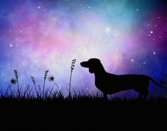 Dachshund Facts, Dachshund Breed, Arte Dachshund, Dachshund Love, Clever Dog, Most Popular Dog Breeds, Weenie Dogs, Dog Paintings, Scottish Terrier