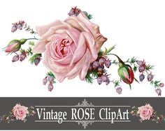 Vintage Rose PNG Clip Art - Printable Image - Instant Download - Digital Design Graphic Illustration - Pink Flowers - Clipart (FW17)