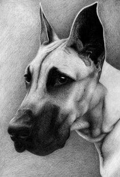 dog, great dane (?) from a4, mechanical pencil 0.5 b My FB fanpage: www.facebook.com/managa.art