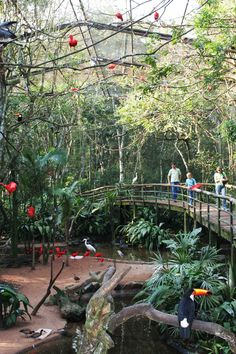 Bird Park, Iguassu Falls Brazil. See for yourself! I can show you!