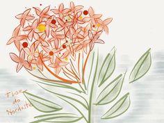 Flor de Pipa