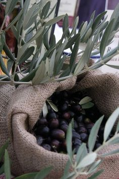 **olives I could eat olives all day Olives, Olive Gardens, Exotic Plants, Mint Plants, Fresh Fruits And Vegetables, Olive Tree, Green And Gold, Organic, Color Themes