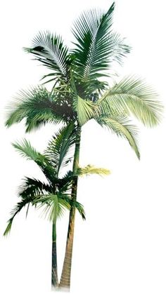 palmier                                                                                                                                                                                 Plus
