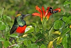Double-collared-Sunbird and insects are popular in South African gardens as well as in #Cape Town