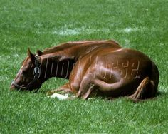 Secretariat in repose At Claiborne Farm - Blood Horse