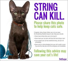 Remember to keep your cats safe! Strings/Yarn can kill. Never leave them unattended while they are playing.