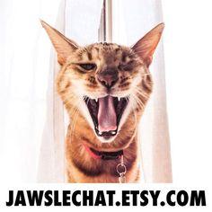 Quand un Bengal veut se faire entendre... Il ne passe jamais inaperçu!   jawslechat.etsy.com jaws.cat