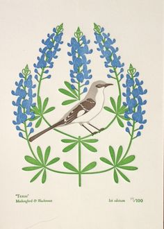 Texas Mockingbird And Bluebonnet Mara Murphy Anna Brannings Etsy Shop Boasts The First Bunch Of Prints From Their Birds Blooms 50 States