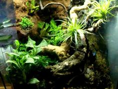 """This is a vivarium with a waterfall and some Bromeliads attatched to a foam custom buildout. Extention cords are hiddin with a 2"""" pvc pipe built  into the foam during construction. The pump is a 600 gph with a homeade adjustable outlet for directing the flow backwards so it doesnt spray straight out.  The cork bark wooden piece near the bottom s..."""
