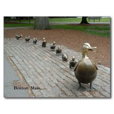 =>quality product          Make Way for Ducklings! Postcards           Make Way for Ducklings! Postcards you will get best price offer lowest prices or diccount couponeHow to          Make Way for Ducklings! Postcards lowest price Fast Shipping and save your money Now!!...Cleck See More >>> http://www.zazzle.com/make_way_for_ducklings_postcards-239041929121806391?rf=238627982471231924&zbar=1&tc=terrest
