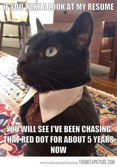 Unemployed business cat