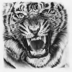 Tiger drawing by ~JoshuaBeatson on deviantART (Want this one my finger as a tattoo maybe when I'm nineteen :):