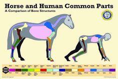 Si le Bac est terminé, une autre période d'examen se prépare. Vous avez prévu de passer un galop cet été ? The Pony Club vous aide à réviser la théorie.