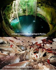terra-mater: 15 amazing things in nature you... - Look - all the pretty pictures!