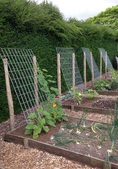 Our Beginner Gardening Tips / Raised Garden Bed Tips Backyard Vegetable Gardens, Veg Garden, Vegetable Garden Design, Edible Garden, Outdoor Gardens, Garden Arbor, Garden Trellis, Garden Edging, Growing Vegetables