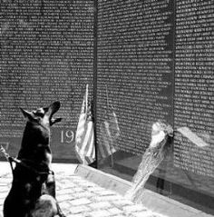 War Dogs of Vietnam, Nearly 4000 dogs served in Vietnam and saved up to 10,000 American servicemen through their scouting and sentry duties. When withdrawing from Vietnam in 1973, the military sadly classified the dogs as surplus equipment to be left behind during evacuation!  Many dogs were left with South Vietnamese allies who were afraid of the dogs and didn't know how to handle them.