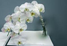 Orchidee bruidsboeket