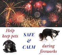 Help Pets Stay Safe and Calm During Fireworks This 4th of July