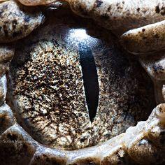 19 macrophotographies d'yeux - http://www.2tout2rien.fr/macrophotographies-d-yeux/
