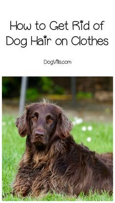 Best Ways To Clean Dog Hair Off Hardwood Floors Cleaning
