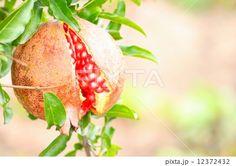 割れたザクロ Pomegranate, Strawberry, Fruit, Grenada, Strawberry Fruit, Strawberries