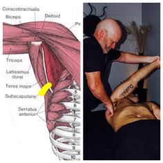 Located in Manchester and Hooksett, NH area. We specialize In Full Body Deep Tissue Massage With Swedish Gymnastics. Latissimus Dorsi, Shoulder Joint, Scapula, Rotator Cuff, Deep Tissue, Massage Therapy, Biceps, Blade, Triangle