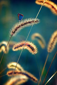 Peaceful Light - butterfly