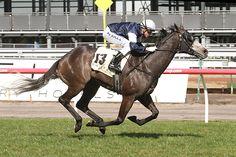 Fawkner (AUS) 2007 Gr.g. (Reset (AUS)-Dane Belltar (AUS) by Danewin (AUS) 1st MRC Caulfield/Yalumba S (AUS-G1,2000mT,Caulfield) (photo: Racing and Sports)