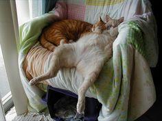 ソファーから身体を投げ出して眠る猫