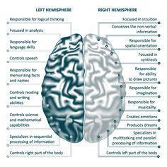There are two hemispheres of the brain: right and left. Each side is responsible for controlling the opposite side of the body (i.e. right brain controls left side of the body and vice versa). Each hemisphere naturally inhibits the opposite side so that the body doesn't perform mirror movements—both sides making the same movement at the same time.