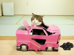 """Maru """"Yeah, I fixed your car: engine should be purring now"""" Crazy Cat Lady, Crazy Cats, I Love Cats, Cool Cats, Cats Are Assholes, Animal Throws, Japanese Cat, Grumpy Cat, Cat Life"""