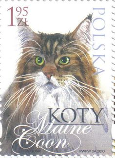 Maine Coon Cat | postage stamp - Poland, 2010 | designed by Andrzej Gosik http://www.mainecoonguide.com/what-is-the-average-maine-coon-lifespan/