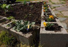 cinderblock raised garden bed