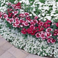 flower garden care Flower Garden With Dianthus Plants Brick Flower Bed, Beautiful Gardens, Beautiful Flowers, White Flowers, Dianthus Flowers, Hydrangea Colors, Flower Landscape, Front Yard Landscaping, Small Gardens