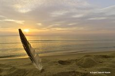 https://flic.kr/p/MrV7Kx | A feather | Writing in the Sand.