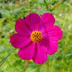 #natureloversgallery #bestflowerspics #eye_spy_flora #rainbow_petals #pink_flowers #blooming_petals #blossom #flowers_lovers #nature by rain_colors_store