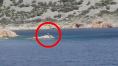 Top 7 Real Mermaid Sightings From Around the World   The Fortean Slip