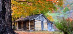 Fall Homestead Under Tree