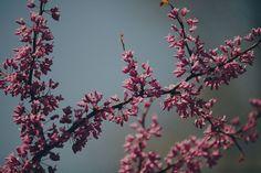 Foråret er ved at blomstre! Det betyder udskiftning af billeder i hjemmet. Her får du 8 flotte plakater til boligen som passer til foråret!